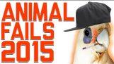 Funniest животных Сбой компиляции 2015   FailArmy