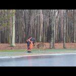 Πυροσβέστες σώζουν ελάφι από παγωμένη λίμνη