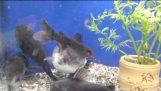 الأسماك ويتم تناول الطعام للعامين المقبلين