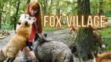 Fox landsby i Zao Japan!