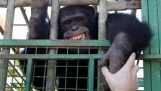 मानव-बंदर को दंडित