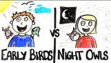 Aamuvuoro vs yökyöpeleille