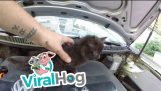 हुड के नीचे बिल्ली के बच्चे