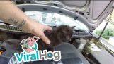 Kittens under the hood