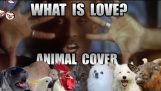 Haddaway – Aşk nedir (Hayvan Kapak)