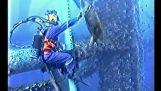 Tortue de mer arrivent plongeur