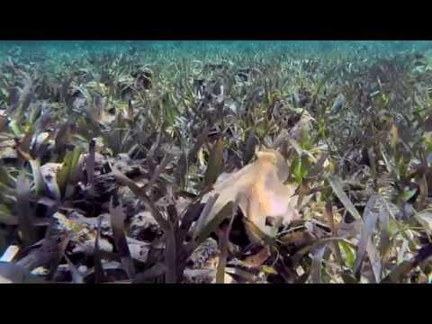 Blekksprut sprute