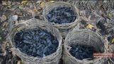 Πως να φτιάξεις κάρβουνο στο δάσος