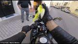Motorcyclist rescues flying bird on bike