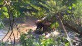 Слоненок спасено от Mud Hole