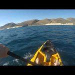 Ψαράς σε καγιάκ εναντίον σφυροκέφαλου καρχαρία