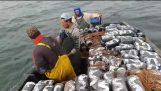 Ενας απλός τρόπος ψαρέματος χταποδιου