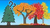 Adevaratul motiv frunze schimba culoarea In toamna