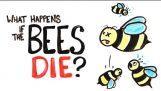 Co się stanie, jeśli wszystkie pszczoły umierają?