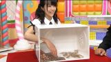 Japanese gameshow – What is in the box?