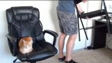 Ako prežiť prácu s mačky!