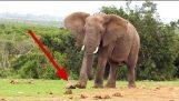 Elephant vs Turtle