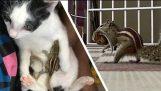 Redde baby ekorn utenfor – Gjenforening med mor etter 4 dager (Happy ending story)