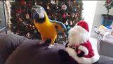 Parrot aanvallen Santa