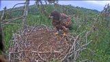 Eagle landning (Misslyckas)