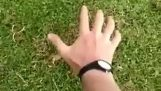 Hvordan til at fange en muldvarp