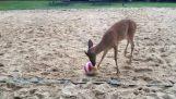 हिरण गेंद के साथ खेलना चाहते हैं