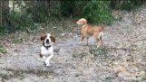 दो कुत्ते पहली बार के लिए बर्फ को देखकर