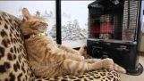Kat at varme ved et varmeapparat