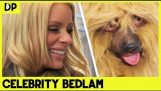 Man Convinces Celebrity He's A Dog – Lee Kern's Celebrity Bedlam