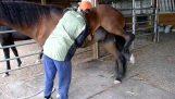 Ένα άλογο απολαμβάνει το ξύσιμο