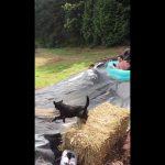Σκύλος εναντίον νεροτσουλήθρας