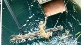 Rescate de un leopardo de pozo