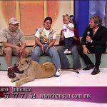 Λιοντάρι επιτίθεται σε ένα μικρό παιδί, σε ζωντανή εκπομπή