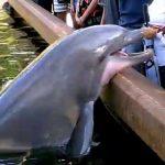 Δελφίνι κλέβει το iPad από τα χέρια μιας γυναίκας
