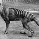 6 είδη εξαφανισμένων ζώων από το 1900