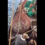 Έκπληξη στα δίχτυα των ψαράδων