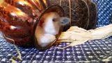 Het koppige kleine konijn