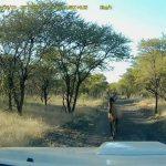 Ασφαλιστική απάτη στη Νότια Αφρική