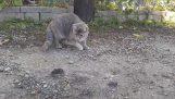 Ποιος θα πιάσει το ποντίκι;