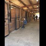 Παιδί εναντίον αλόγου