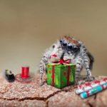 Οι αράχνες γιορτάζουν τα Χριστούγεννα