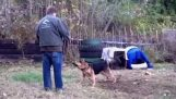 Η απελευθέρωση ενός σκύλου που ήταν αλυσοδεμένος για μια ζωή
