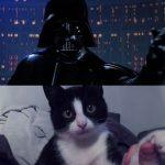 Το Star Wars με γάτες