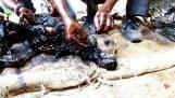 Διάσωση ενός σκύλου που καλύφθηκε από πίσσα