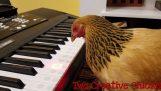 Μια κότα που παίζει πλήκτρα