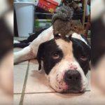 Σκύλος προστατεύει ένα σκίουρο από μια γάτα