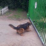 Άγριοι σκύλοι τσακώνονται ανάμεσα από μια πόρτα