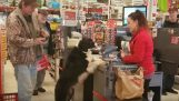 А кучето отива на пазар