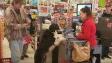 Ένας σκύλος πηγαίνει για ψώνια