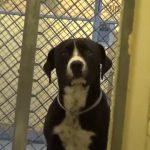 Σκύλος σε καταφύγιο τρελαίνεται από τη χαρά του όταν τον υιοθετούν